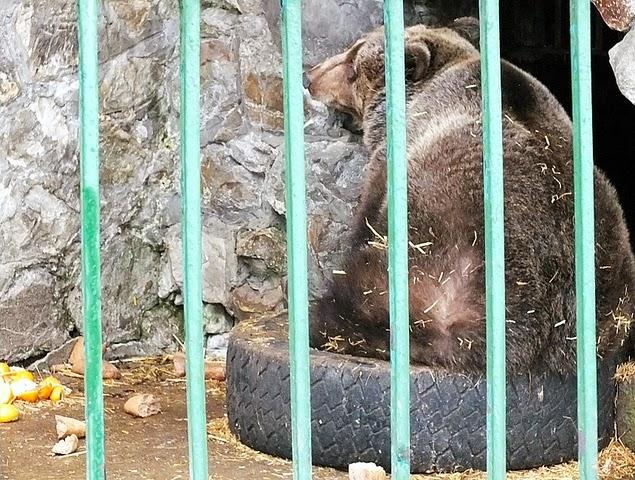 urs zoo piatra neamt
