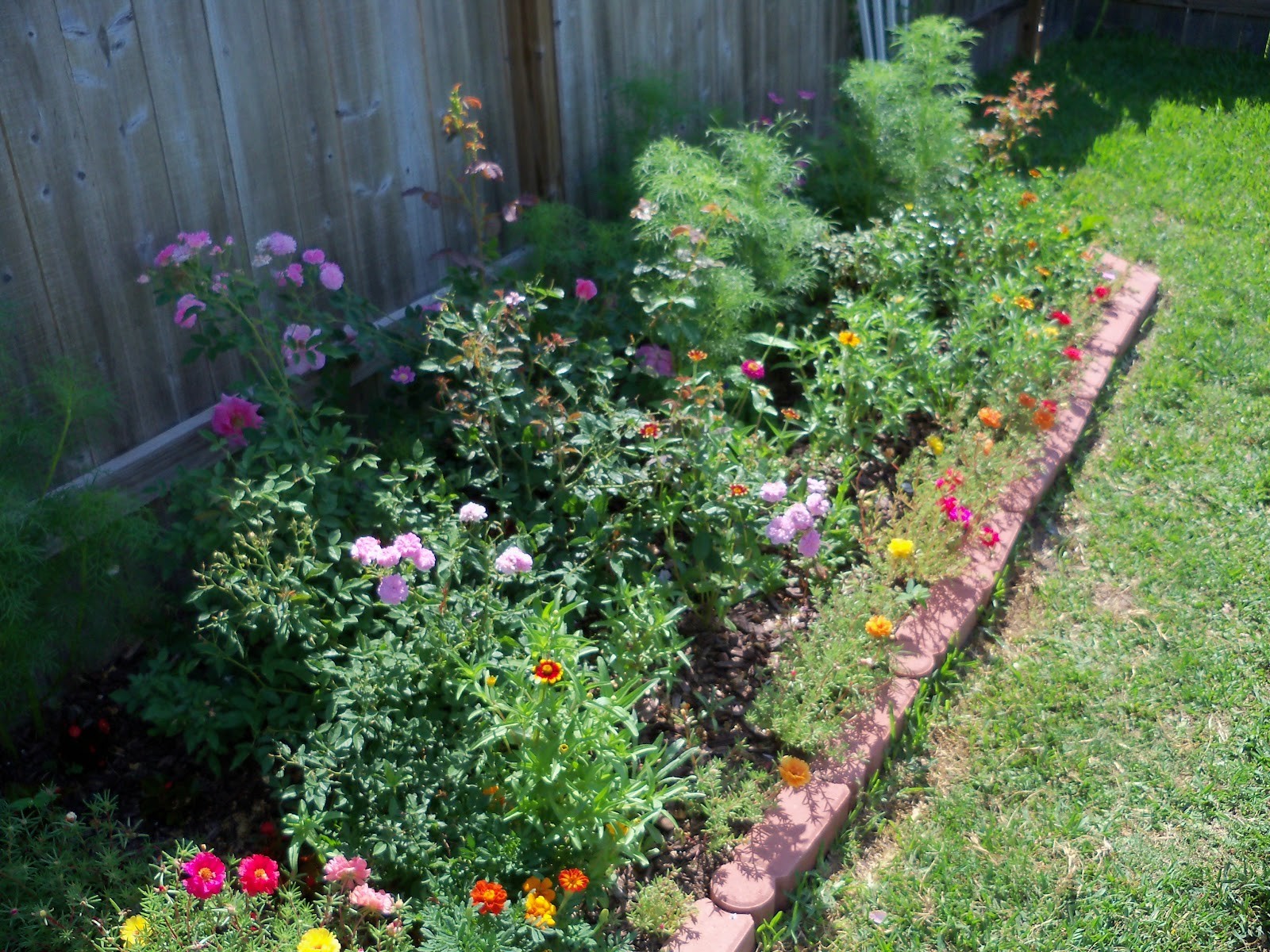 Gardening 2010, Part Two - 101_2614.JPG