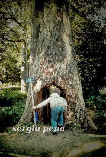 Sergio Pena
