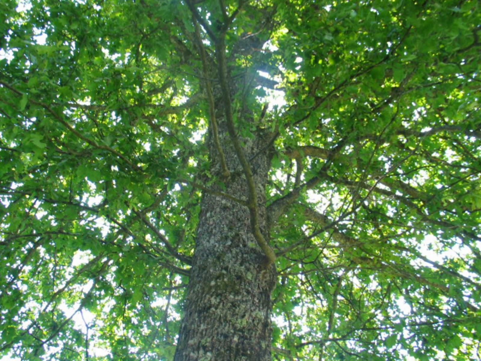 Taborjenje, Lahinja 2005 1. del - img_1104.jpg