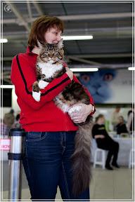 cats-show-24-03-2012-fife-spb-www.coonplanet.ru-087.jpg