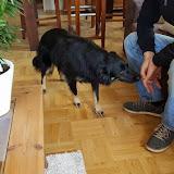 Molly u novom domu - 18194569_1560409060700509_2274852789763578167_n.jpg