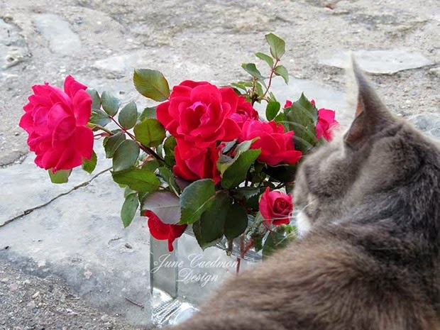RosesVase_Kitty