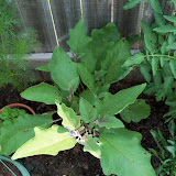 Gardening 2010, Part Two - 101_3077.JPG