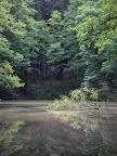 Mlžný rybník