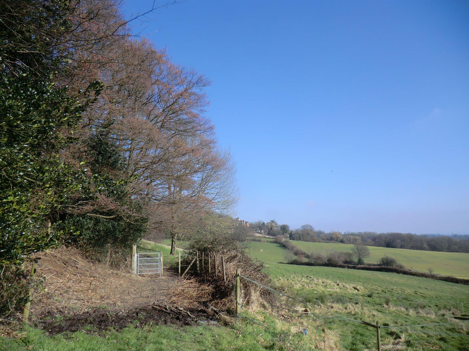 CIMG2893 Through a boggy patch below Tenchleys Wood