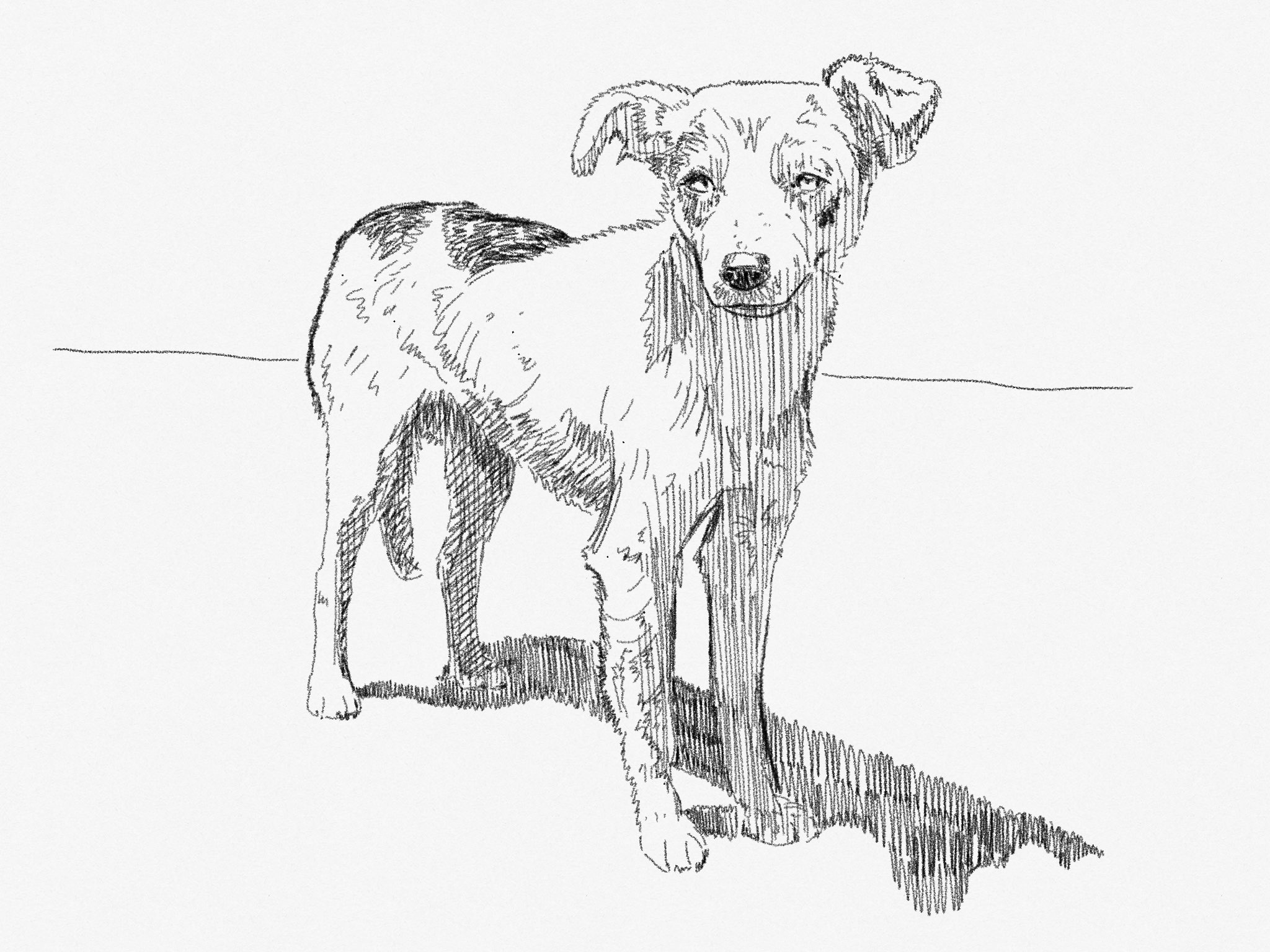 street dog made with Sketches