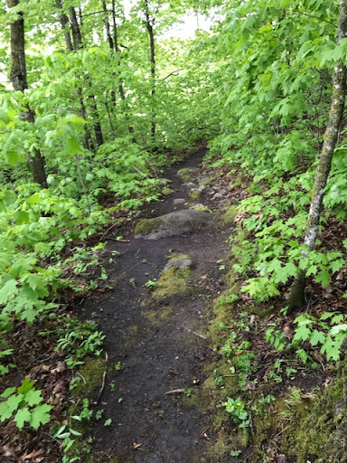 Bente's Bump singletrack segment after clearing. May 22nd, 2017
