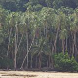 Côte Nord de Pulau Mantanani à marée basse. Sabah, 28 juillet 2011. Photo : J.-M. Gayman