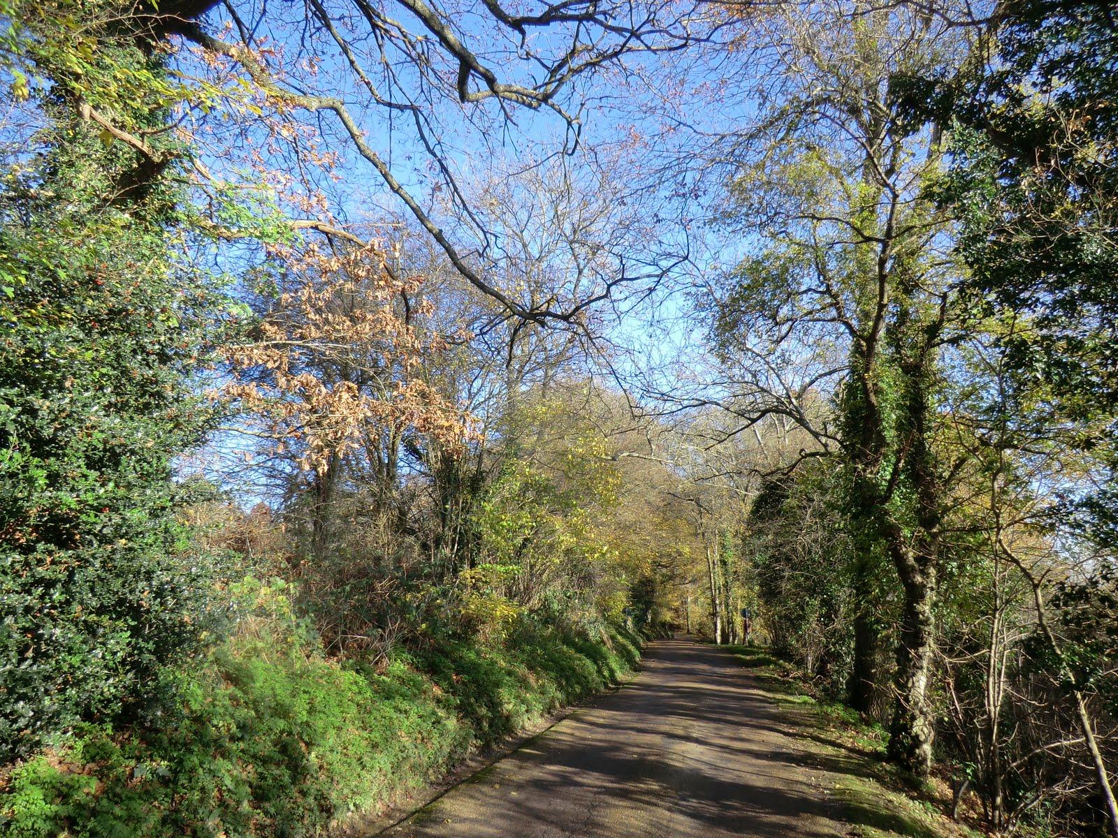 CIMG6245 Burrswood driveway