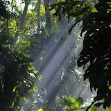 Ithomiinae dans un rayon de soleil. Caçandoca (Ubatuba, SP), 21 février 2011. Photo : J.-M. Gayman