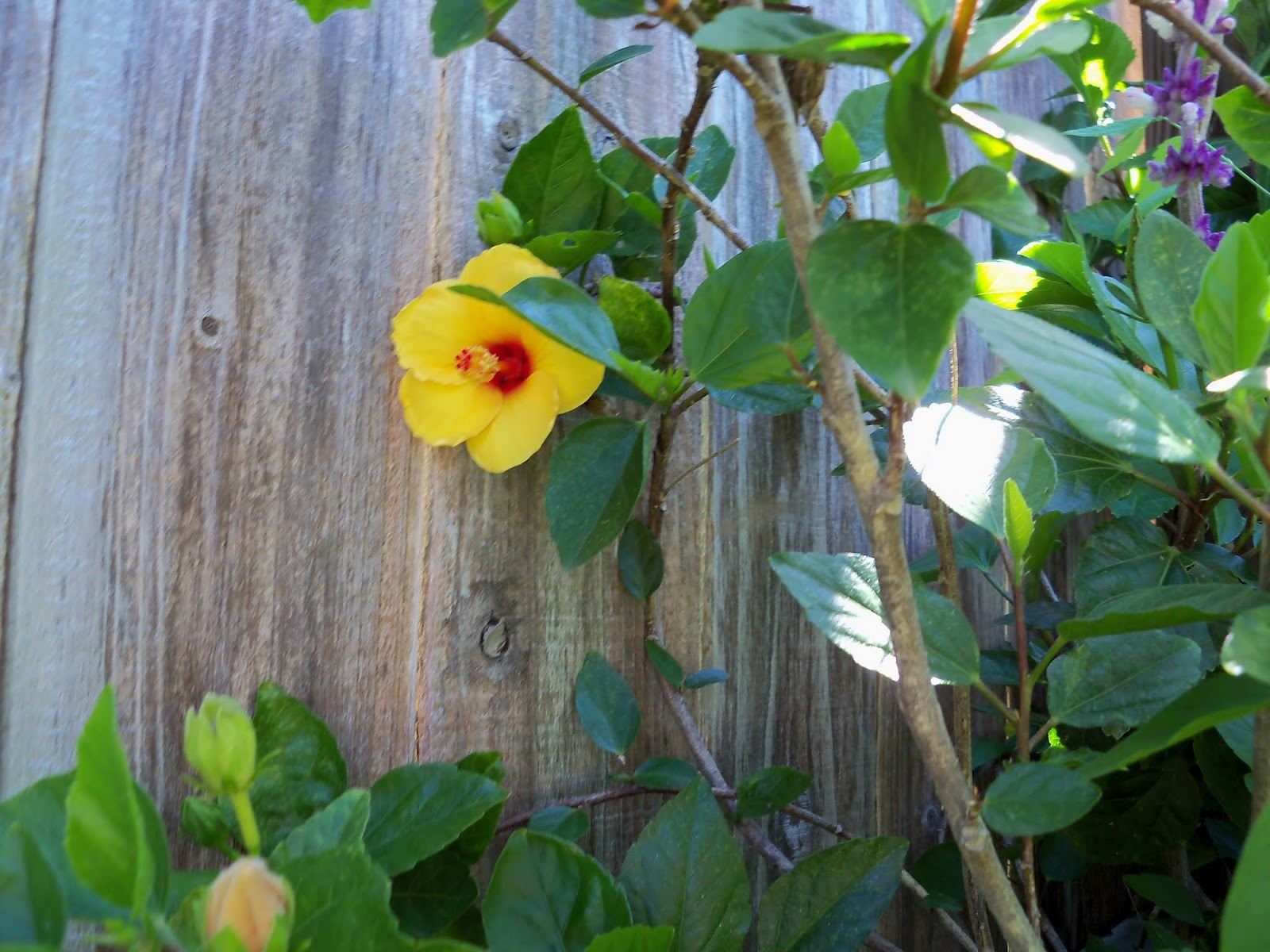 Gardening 2013 - 115_6278.JPG