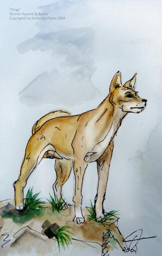 """""""Dingo"""" Copyright by Katharina Theine"""