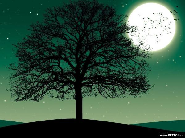 Dream Of Magick Landscape 5, Magical Landscapes 5