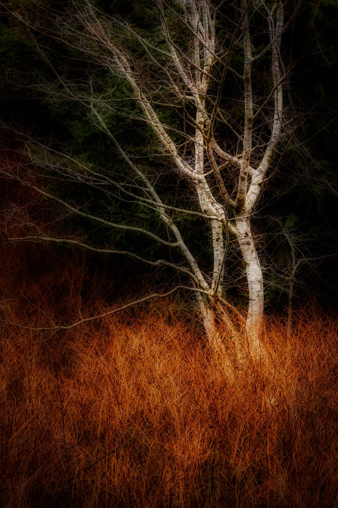"""Winter Glow"" by Roy Kropp - 3d Place Print"