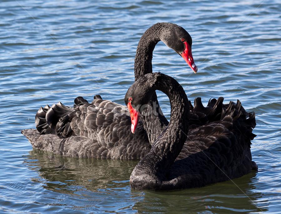 by Roger Fanner - Animals Birds