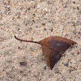 leaf-in-sand_MG_2522-copy.jpg