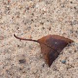 leaf-in-sand_MG_2522-copy.jpg