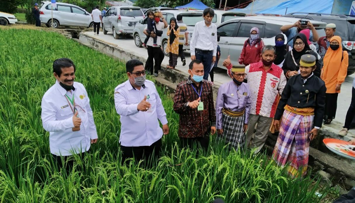 Forum Komunikasi P4S Sulawesi Barat Laksanakan Tradisi Mattammu Bulung Padi