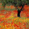 flowers_forever_hd1080p.png