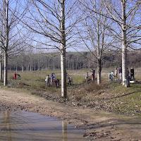 Plantacion en el Arrollo de Tejada - Tres Cantos - 3 de diciembre de 2003
