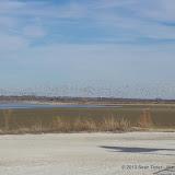 01-19-13 Hagerman Wildlife Preserve and Denison Dam - IMGP4102.JPG