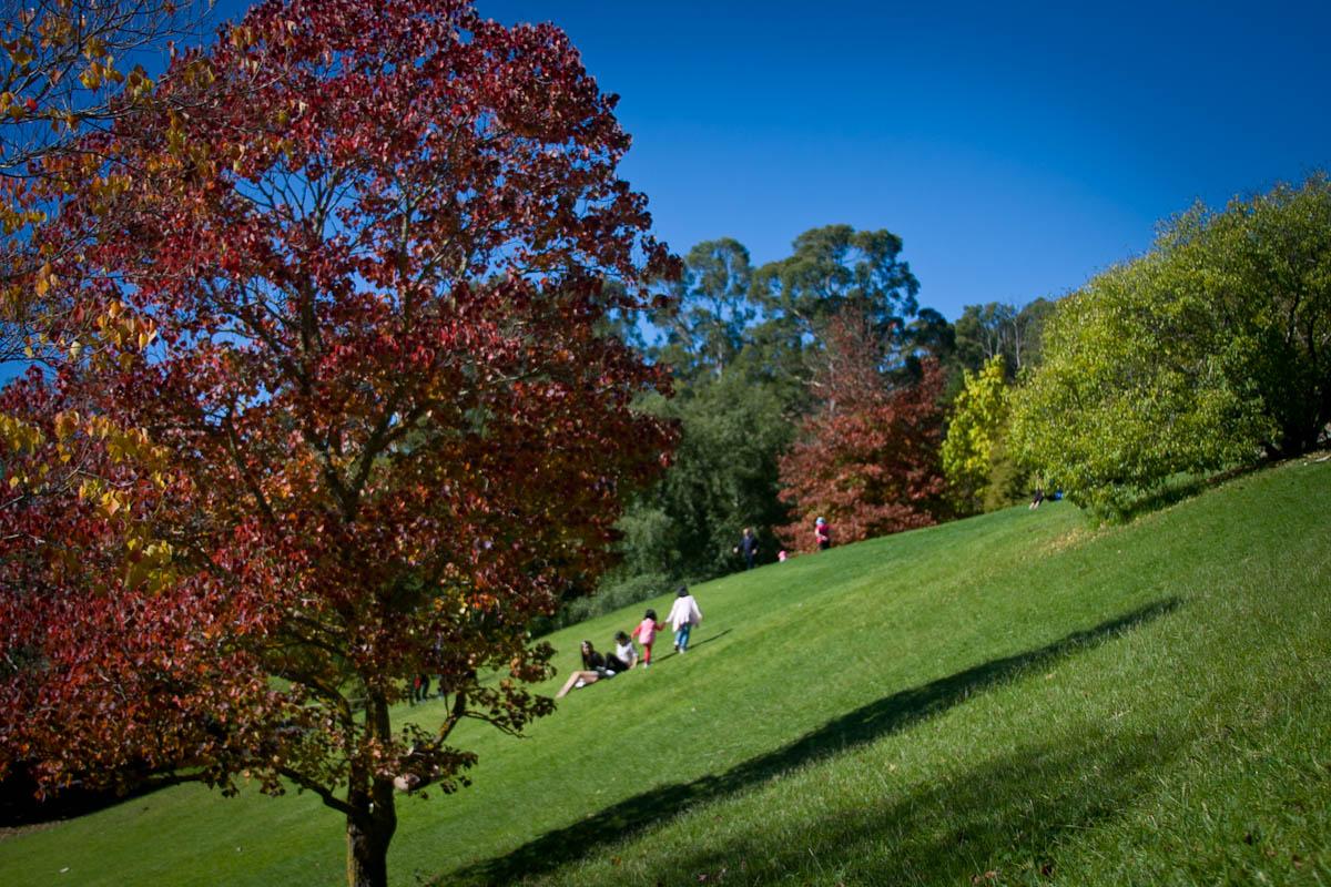 2011 04 25 Mt Lofty Botanic Garden - IMG_6431.jpg