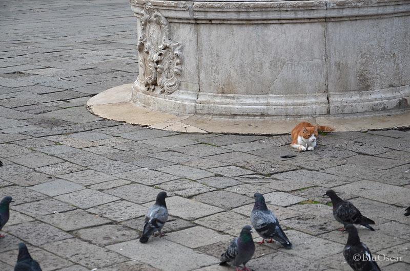 Gatti veneziani 10 10 2015 N 4