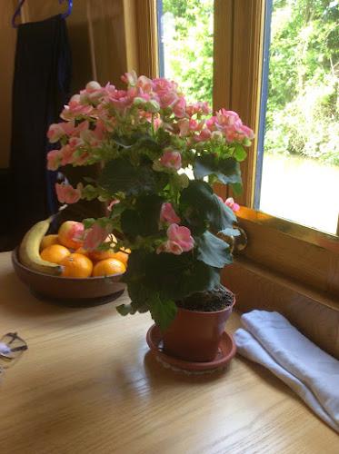 Big Begonia