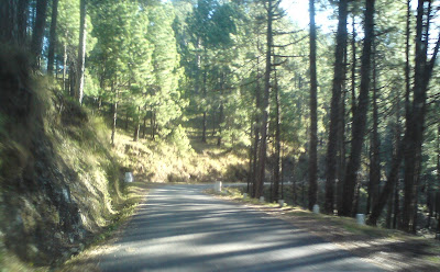 Beautiful roads in the Himalayas covered with pine trees