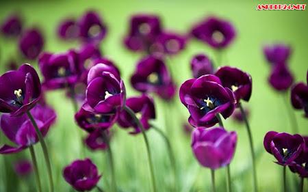 Hình Nền Các Loại Hoa Đẹp Nhất Cho Máy Tính