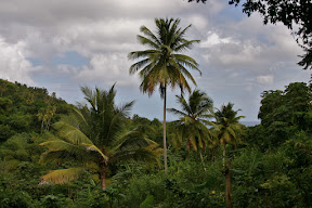 Rainforest canopy in Grenada