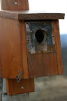Bluebird house on the front fence.