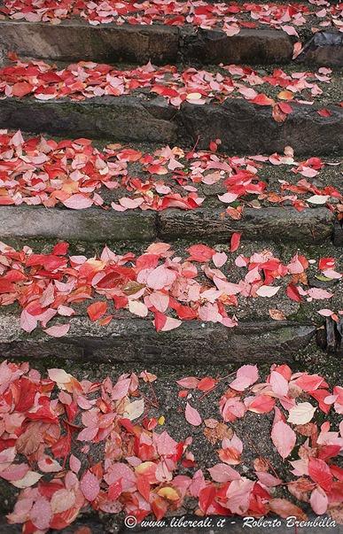2-2011-11-08_Varenna-(11)