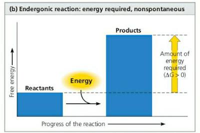 Grafik Reaksi Endergonik