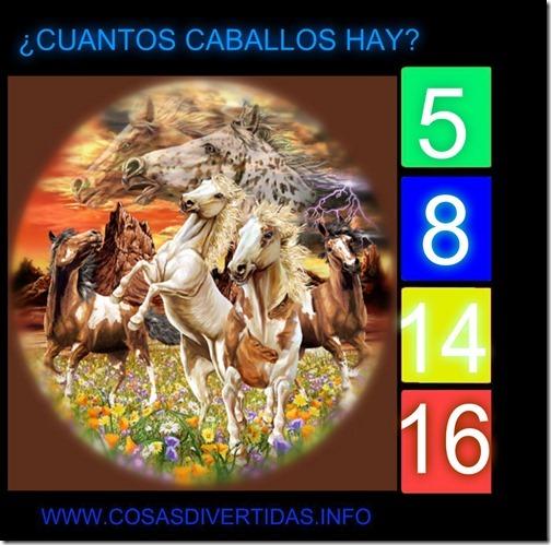 14CABALLOS (2)