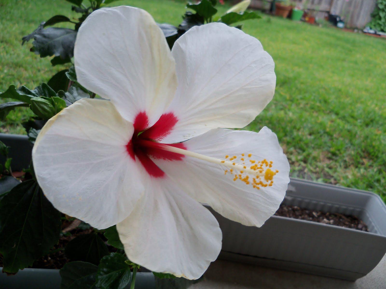 Gardening 2010 - 101_1552.JPG