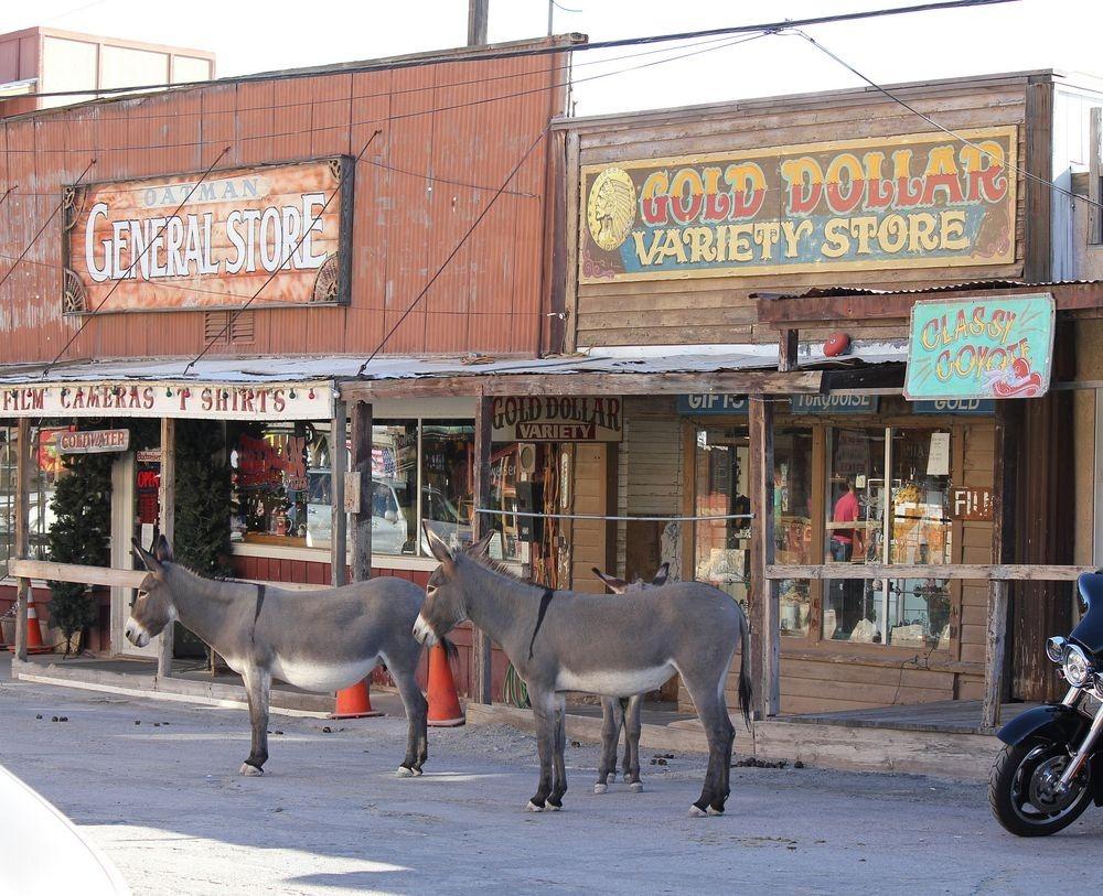 burros-oatman-2