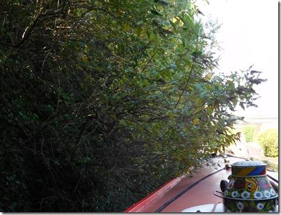 1 vegetation at bridge