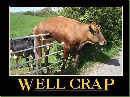 Funny-cow-stuck-in-a-fence