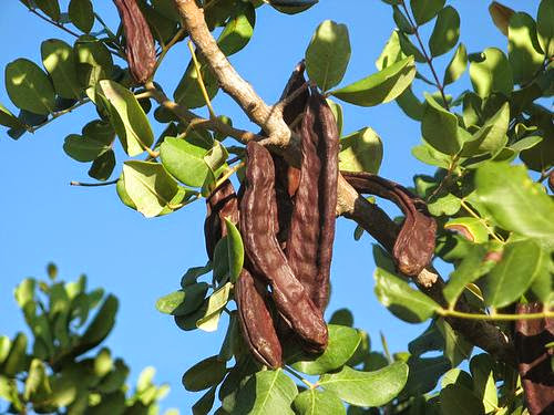 Carob Natural Chocolate Substitute