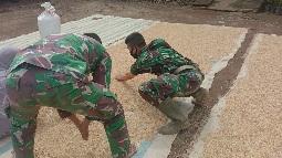 Bercocok Tanam Padi Sebagai  Sumber Pendapatan Utama di Desa Siuhom