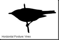 ID_Posture_hz_1