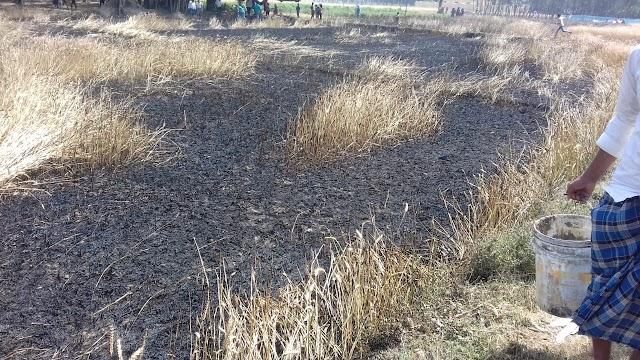 सिद्धार्थनगर:बिजली तारों में स्पार्किंग से लगी आग, गेहू की फसल जलकर राख