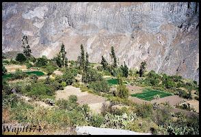 Un mois aux pays des Incas, lamas et condors (Pérou-Bolivie) 058%2520-%2520Ca%25C3%25B1on%2520de%2520Colca
