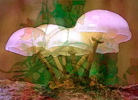 """The """"Magic Mushrooms"""" piece from the """"2007"""" collection"""