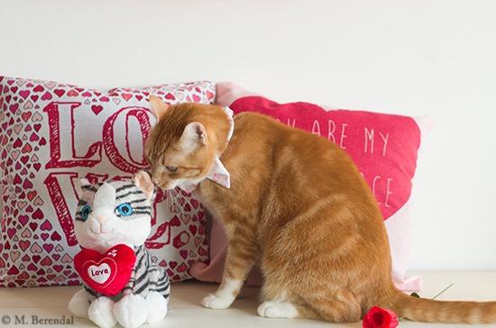 [Teddy_Valentine_01%5B4%5D]