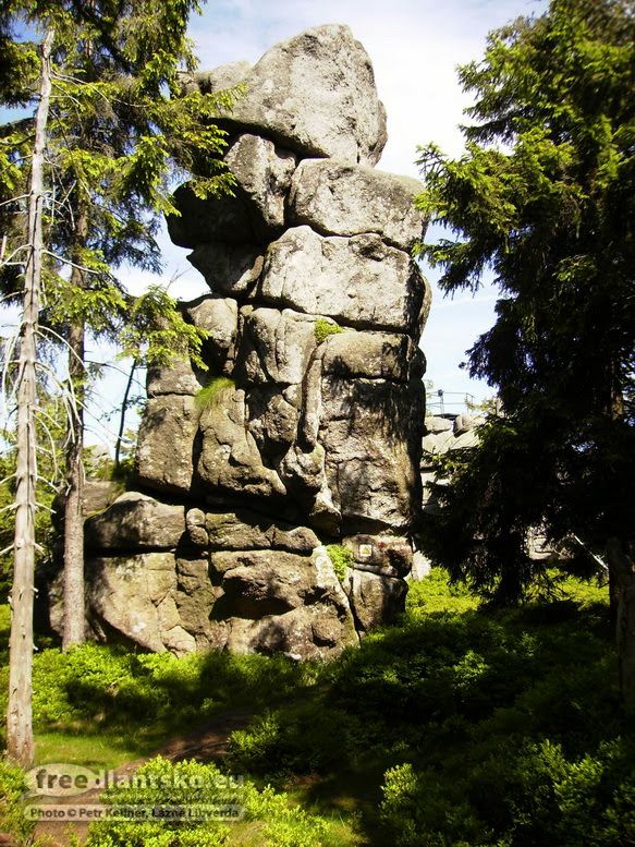 snezna-hlavicka