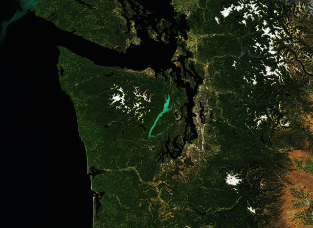 Satellite view of a phytoplankton bloom in Washington State's Hood Canal. The Moderate Resolution Imaging Spectroradiometer (MODIS) on NASA's Terra satellite captured this image on 31 July 2017. This wide view shows the extent of the bloom visible at the water's surface. Photo: Joshua Stevens / NASA Earth Observatory