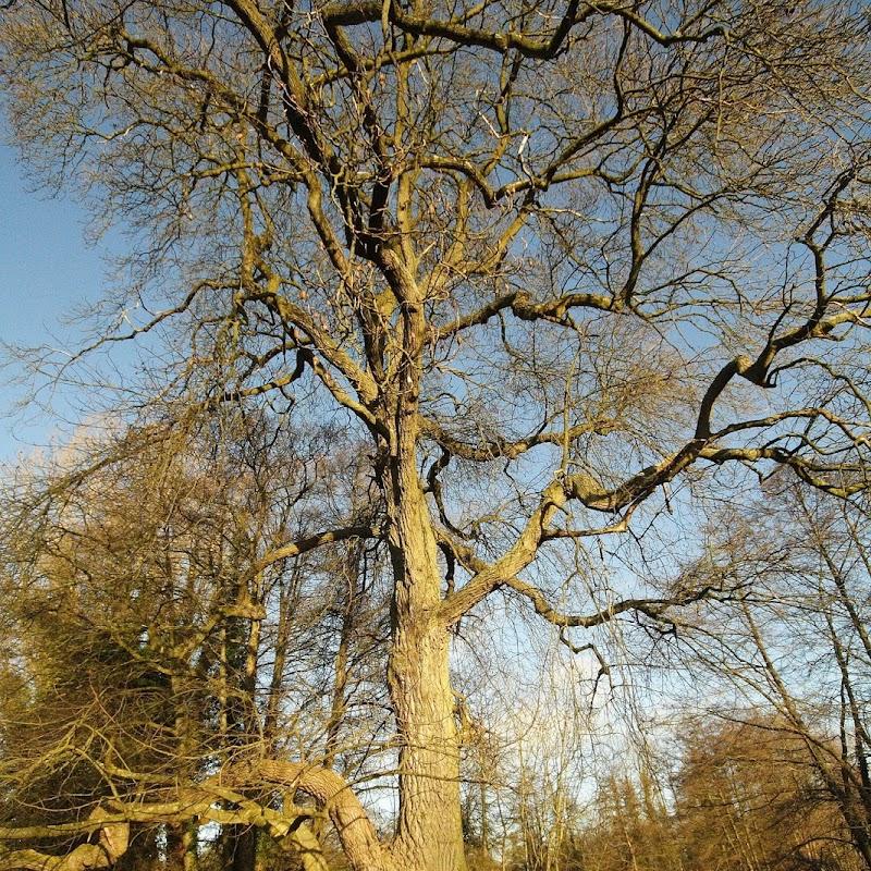 Stowe_Trees_21.JPG